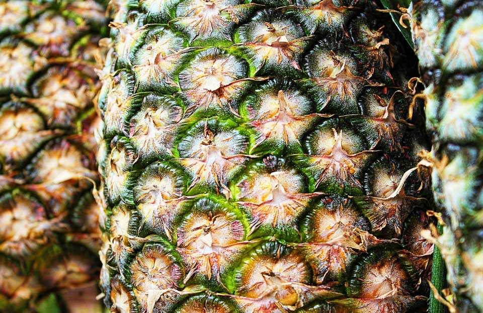 Piña Tropical (Ananas sativa)